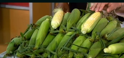 Video: Don't Shuck the Corn - Produce Pete Tells Us Why, corn, produce pete, the three tomatoes