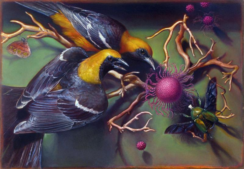 KEVIN KING : Fall of a Sparrow, kevin king orioles
