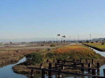 bird walks LA, the three tonmatoes