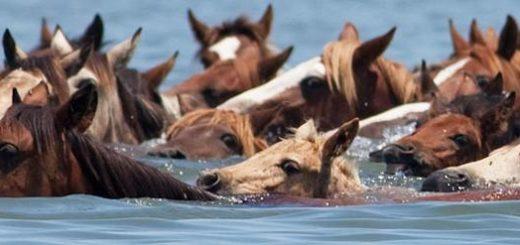 pony swim, travel, the three tomatoes