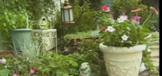 welcome to my garden, debbie's garden, the three tomatoes