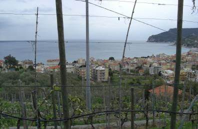 Wine Ratings – What You Should Know,sancio vineyards italy, italian white wines, ve raimo brands, the three tomatoes
