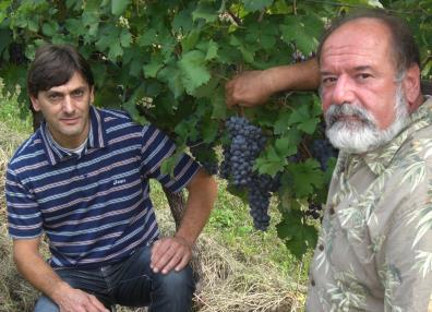 victorraimo alex milesi, milesi giovanni vineyards, the three tomnatoes
