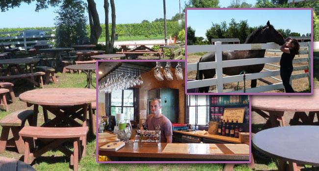 baiting hollow farm vineyards, 3T wine trip, the three tomatoes