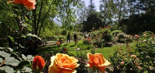 LA Parks & Gardens, Descano, LA Anytime, The Three Tomatoes