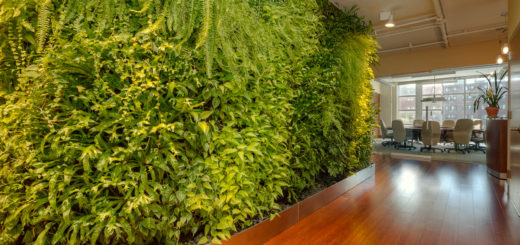 Feng Shui and plants
