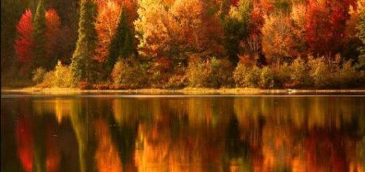 Creating Balance: The Yin & Yang of Fall
