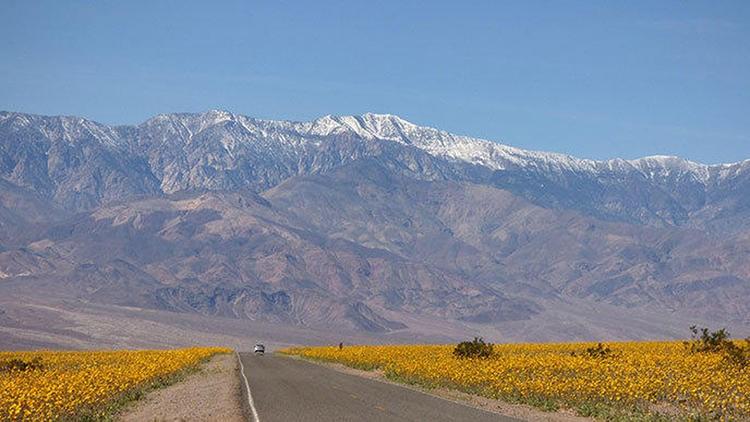 LA LIFE: Desert Blooms, Los Olivos, Bloomin' LA, Trading Post