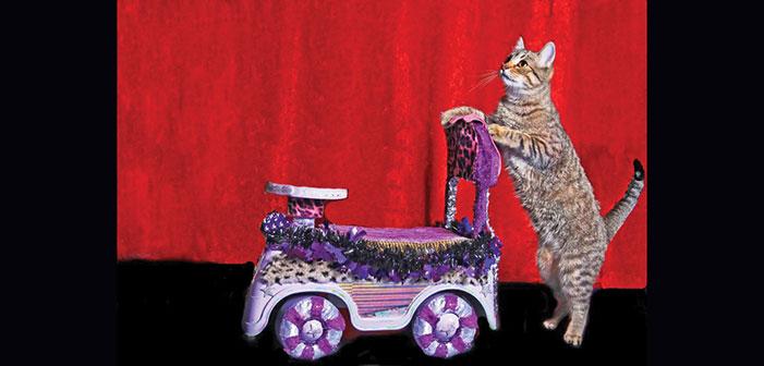 LA LIFE: Late Bloomer, California Art, Acro-Cats
