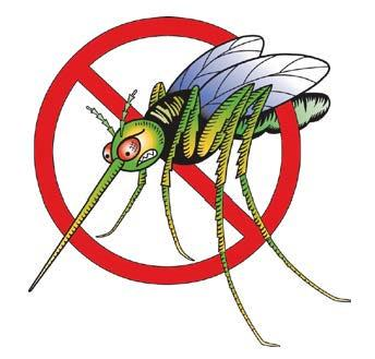Mosquito-Borne Illnesses: What They Are and How to Prevent Them