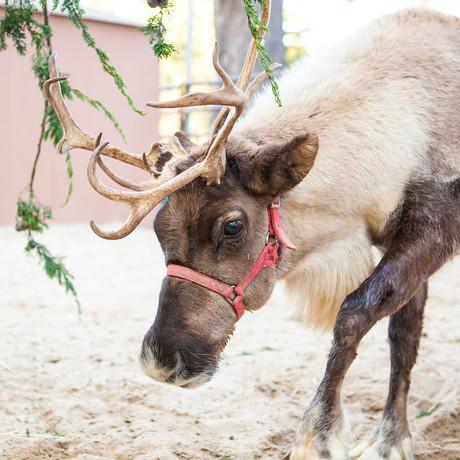 reindeer_web_hero_low_res-1