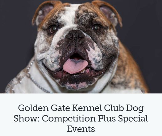 golden gate kennel club