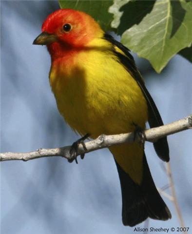 LA LIFE: Trail Days, Birds, Woofstock, Tuesday