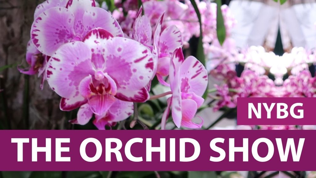 NYC Life: Women Power, Oscars, Books and Orchids