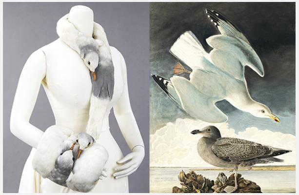 Shoes and Birds, Fashion and Feathers at the NY Historical Society
