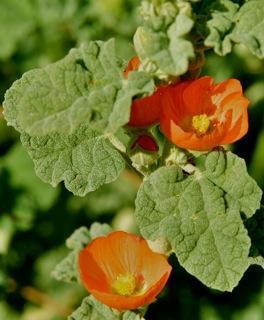 LA LIFE: Wildflowers, Arts & Crafts, Victorian Tea and Fashion