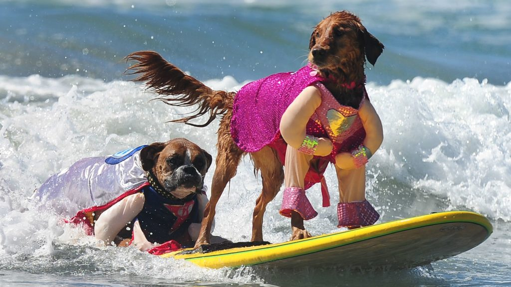 SF Life: Dog Surfing, Cabrillo Fest, A Feast Of Festivals