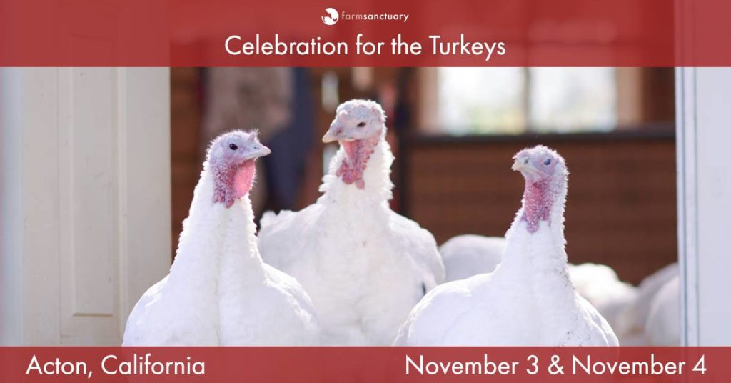 LA LIFE: Music, Dogs, Turkeys, Harvest, and a Grand Reveal