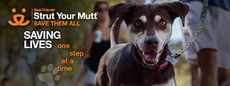 Design Fair, Festivals, Beyond Hunger, Strut Your Mutt