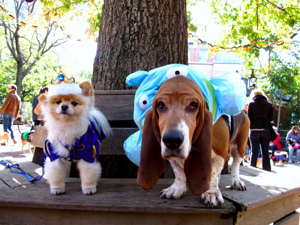 NYC LIFE: Events for Lovers of Dogs, Books, Bargains, Music, Comedy & More