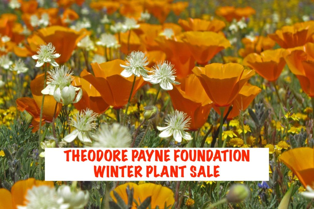 Theordore Payne Foundation Winter Sale. The three Tomatoes