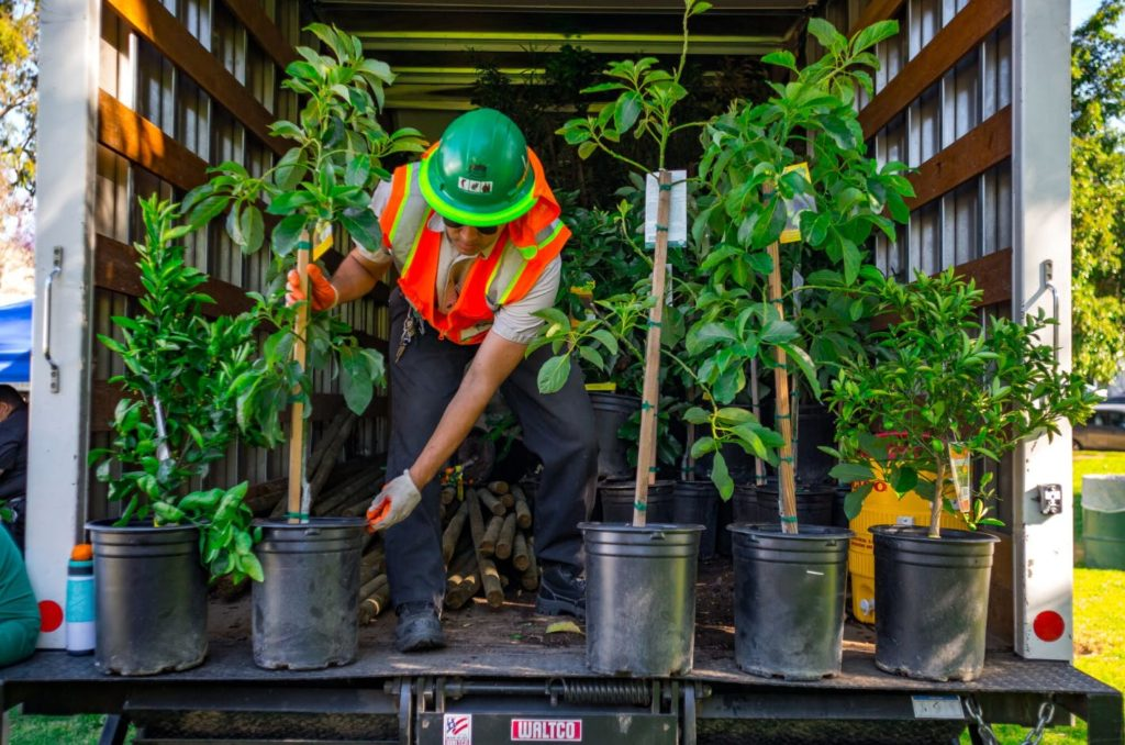 Feb 23, March 9 and March 23.  Free Tree Giveaways