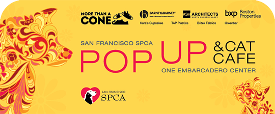 SF SPCA Pop Up & Cat Cafe