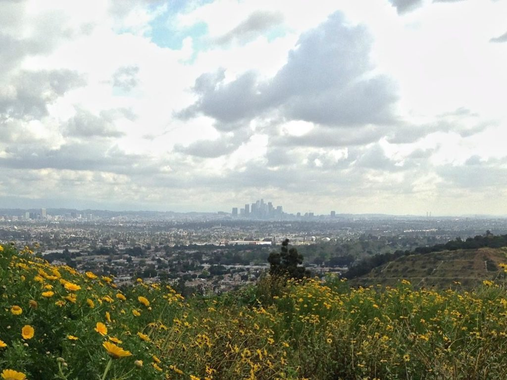 LA LIFE: Clean Up, Pause, Book Fest, Nature, Heaven