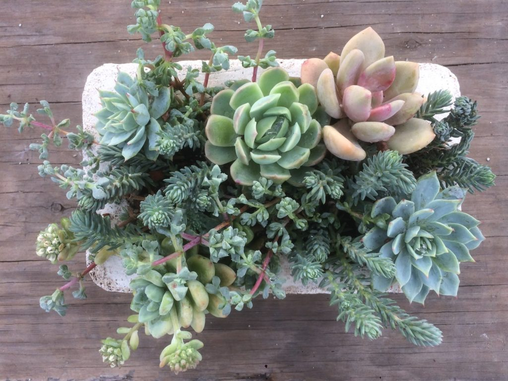 SF LIFE: Ice Cream, Mother's Day, Plants, Wanderlust, Books