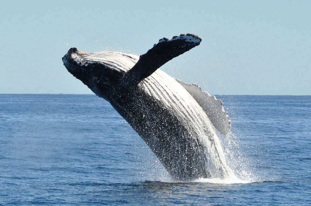 Whenever Possible: Go Whale Watching