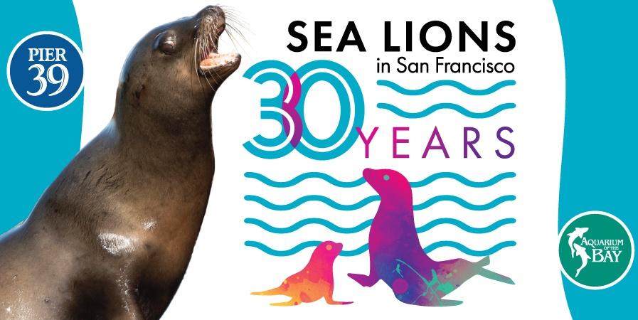 SF LIFE: Sketchfest, Restaurant Week, Art Fairs Sea Lions