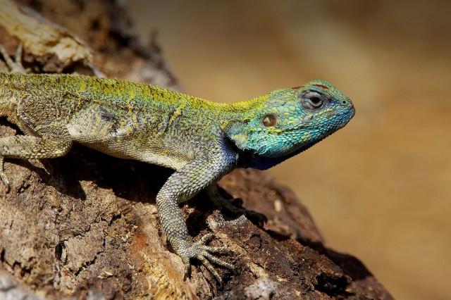LA LIFE: Lizard Moves, Mental Health, Paley Fest, Bridge Celebration