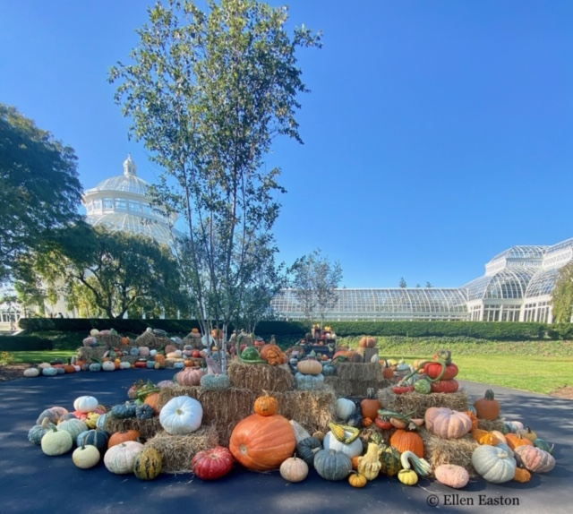 NYC LIFE: Pumpkins Galore, Dining Out, Piano Bars, Open House, and More