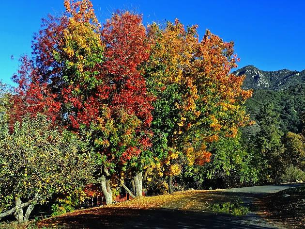 LA LIFE: Fall Leaves, Marketplace, Autumn Festival, Matzo Balls and More