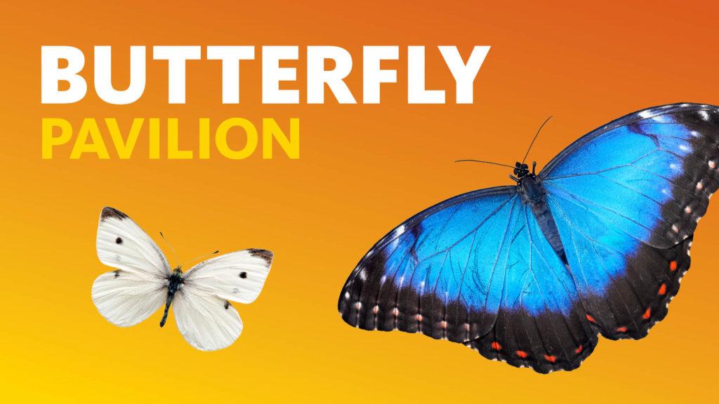 LA LIFE: Happy Hour, Butterflies, Woman's Place, Healing Dogs, Celebrate