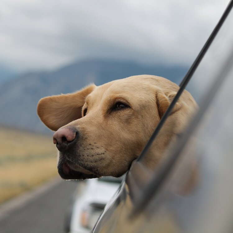 Road Trips with Your Pet