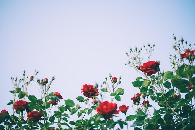 Random Gifts of Flowers