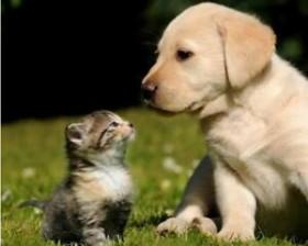 Pets Guest